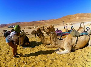 Tracing Israel & Palestine - Must See In Israel and Palestine